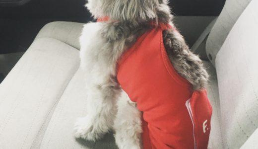 犬の術後服、エリザベスウエアのメリット、デメリット
