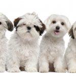 犬の避妊手術