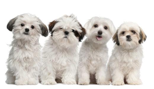 犬の避妊手術と臍ヘルニア手術に踏み切った理由と料金、手術当日のこと