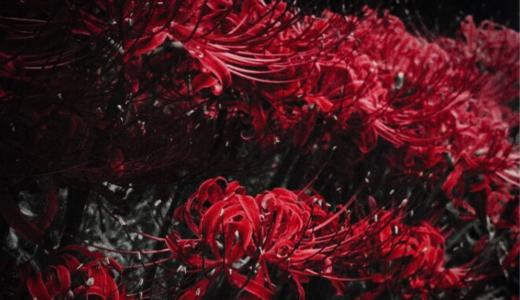 花言葉もいろいろ!怖い・悲しい花言葉を持つ花をご紹介します